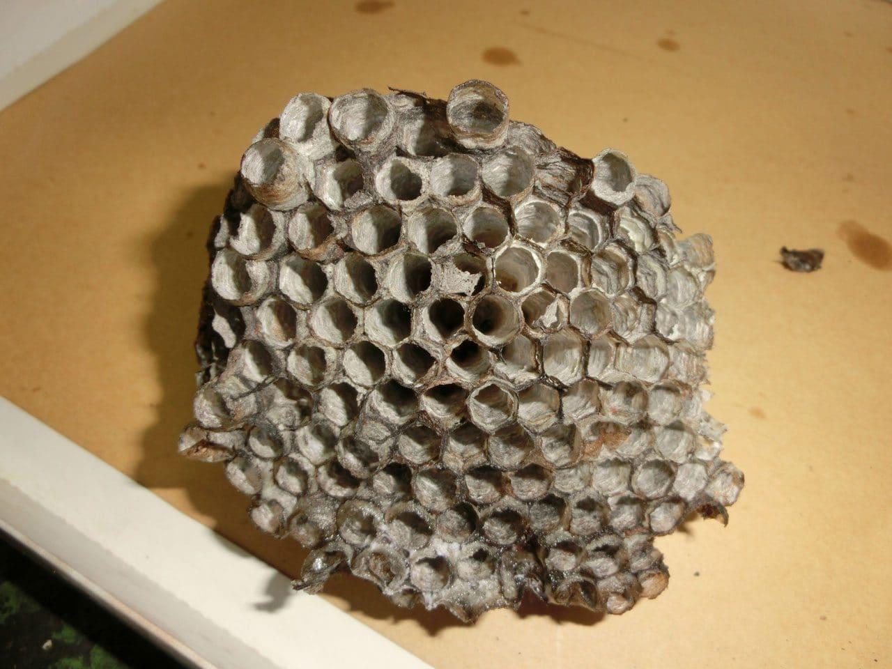 取り除いた蜂の巣