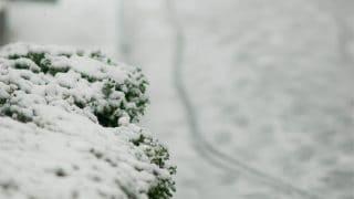 ピッチレスコートでお手入れしたボディ。雪が積もったらどうなるんだろう??